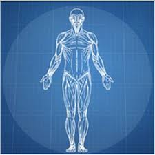 Realign Your Blueprint Of Health